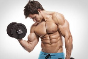 How long does muscle growth last?