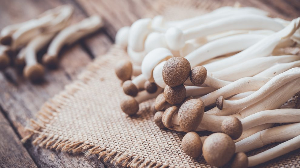 Why is adding mushrooms to your diet a good idea?