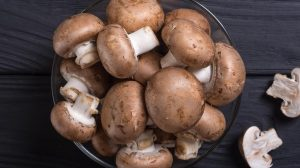 buying Mushrooms and conservation advice