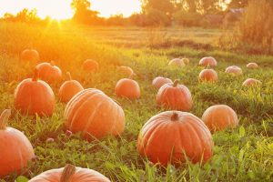 How to keep the pumpkin ?